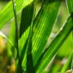 IMG_7211-150x150 Природа