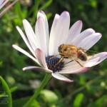 IMG_7272-150x150 Цветы
