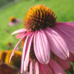IMG_7328-150x150 Цветы